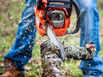 Man Using Chainsaw, Tree Cutting
